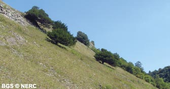 The steep south-facing slope of Burrington Combe, a haven for lime-loving plants
