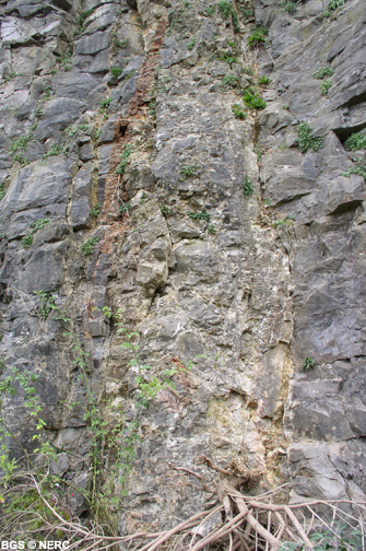 Neptunian dyke infilled with Jurassic material exposed in Cloford Quarry, near Holwell.
