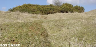 Gorse and anthills developed on limestone grassland, Dolebury Warren