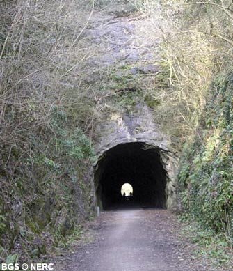 Black Rock Limestone exposed in the Shute Shelve railway tunnel