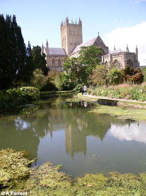 St Andrew's Risings, a large resurgence in the grounds of the Bishops Palace Gardens. This spring drains the limestone to the east of Wells.