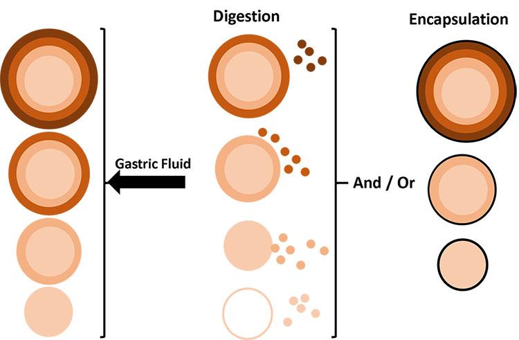 compost application bioavailability lead arsenic