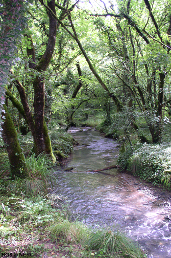 Stream in Asham Wood