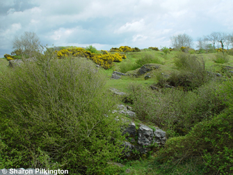 Limestone heath and lead mining
