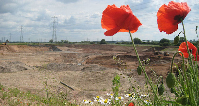 Poppies in sand and gravel quarry, ©Sarah Hannis, BGS, NERC